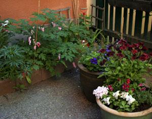 Blommor på vår innergård